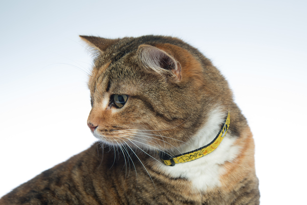 Rogz Neocat Cat Collar Safety Small