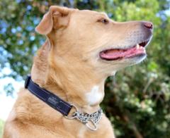 Rogz Obedience Training Dog Collar