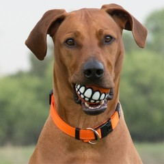 Rogz by Kong Grinz Ball with Teeth