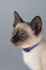 Rogz Alleycat Breakaway Reflective Cat Collar