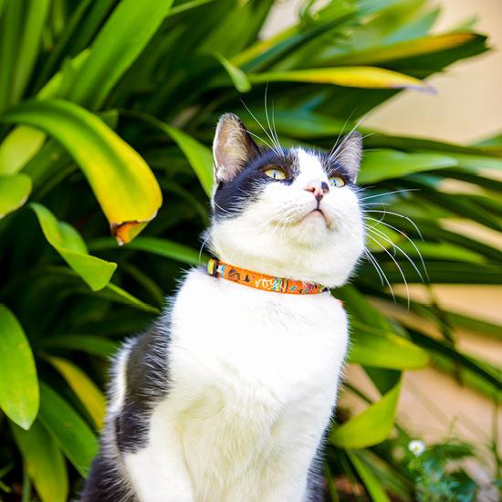 Rogz Cat Collar Neocat  - Small 8-12in