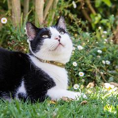 Rogz Cat Collar Trendycat - Small 10-12in