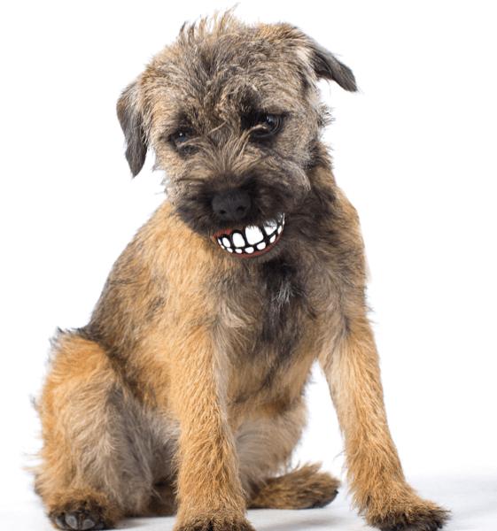 Rogz Dog Ball Grinz with Teeth Small - 2in